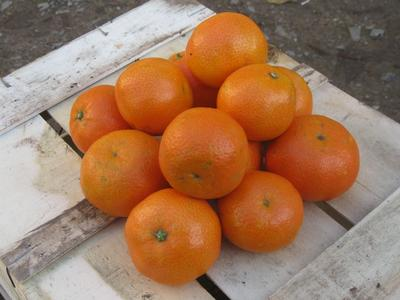 Clementines 800 g